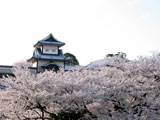 クリックすると金沢城の桜のページにジャンプします
