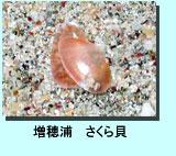 増穂浦さくら貝